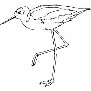 Sandpiper On One Leg Coloring Page