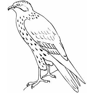 Standing_Falcon.png (300×300)