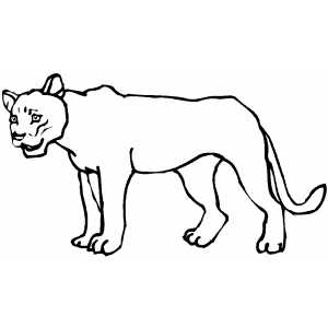 lioness coloring pages - photo#17