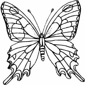 Free Printable Christmas Coloring Pages on Amazing Butterfly Coloring Page