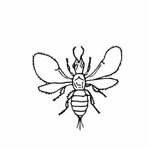 insects one light Colouring Pages