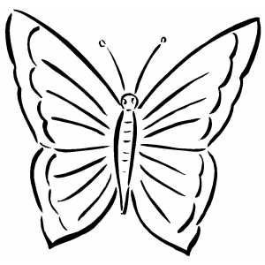 simple butterfly coloring page simple butterfly download now png
