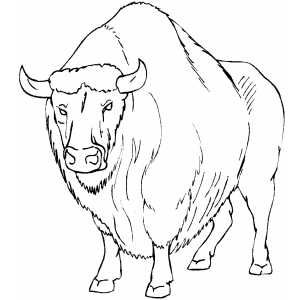 Buffalo sabers free coloring pages for Bison coloring pages