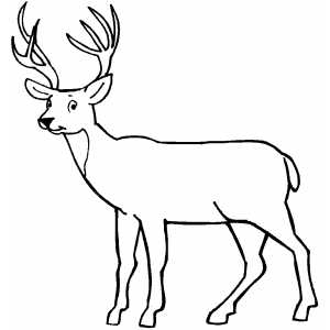 Brown Bear Brown Bear What Do You See Coloring Pages likewise 鹿头纹身脚 further Deer 7 in addition Big Buck Mixed Media Sketch Templates also Coloring Page Of A Deer Head. on whitetail deer coloring pages