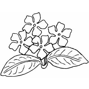 Picture Violet Flower on African Violets Coloring Page