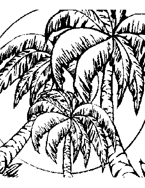 palm tree coloring pages printable palm leaf patterns - Palm Tree Coloring Pages Print