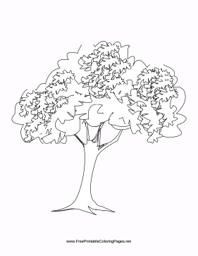 beech tree coloring pages - photo#6