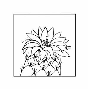 cactus with big flower coloring page cactus with big flower download