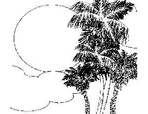 Caribbean trees coloring page for Coloring pages trees plants and flowers