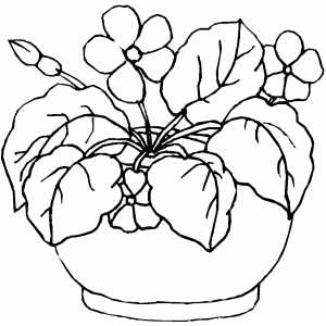 plants flowers coloring pages | Flowers In Round Pot Coloring Page
