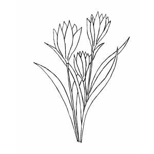 Flowers With Long Leaves coloring page
