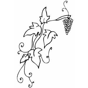Grapevine coloring page for Vine and branches coloring page