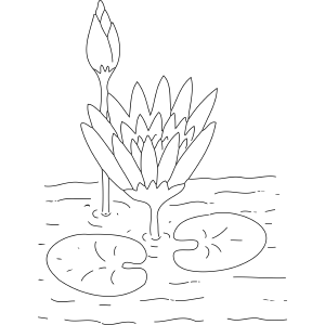 Flower Picture Color on Lilypad Flowers Coloring Page