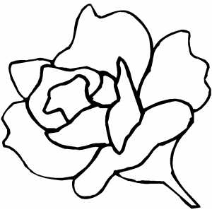 Rose Flower Pictures on Rose Flower Coloring Page