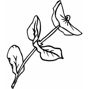 plants flowers coloring pages | Straight Flower Coloring Page