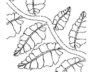 vine coloring pages - vine with leaves coloring page