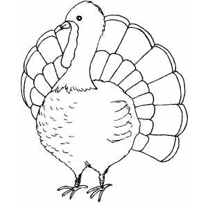Unusual image with regard to printable turkey pictures